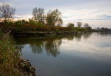 Łowienie amurów w Odrze