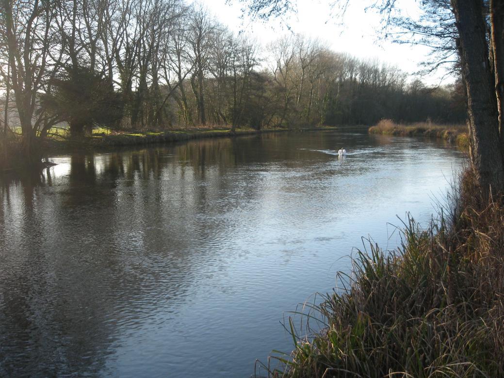 łowienie jazi w rzece