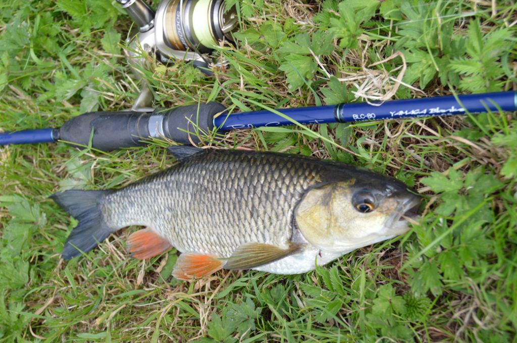 łowienie ryb we wrześniu
