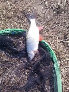 Łowienie ryb na odległościówkę