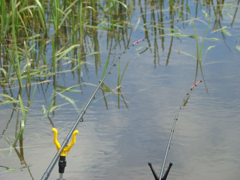 Łowienie na feedere wiosną