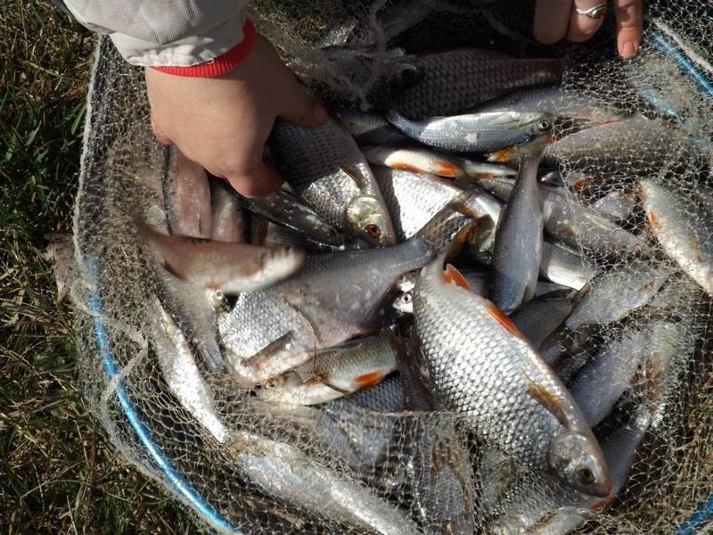 jak łowic ryby na kanale żerańskim