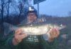 łowienie ryb na spinning w rzece