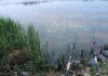 Łowienie na feeder