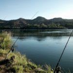 Jak łowić karpie w rzece - kilka wskazówek
