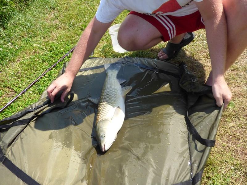 przystanek stawy wędkarstwo, ryby