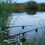 Łowienie karpi latem, wędkarstwo karpiowe latem