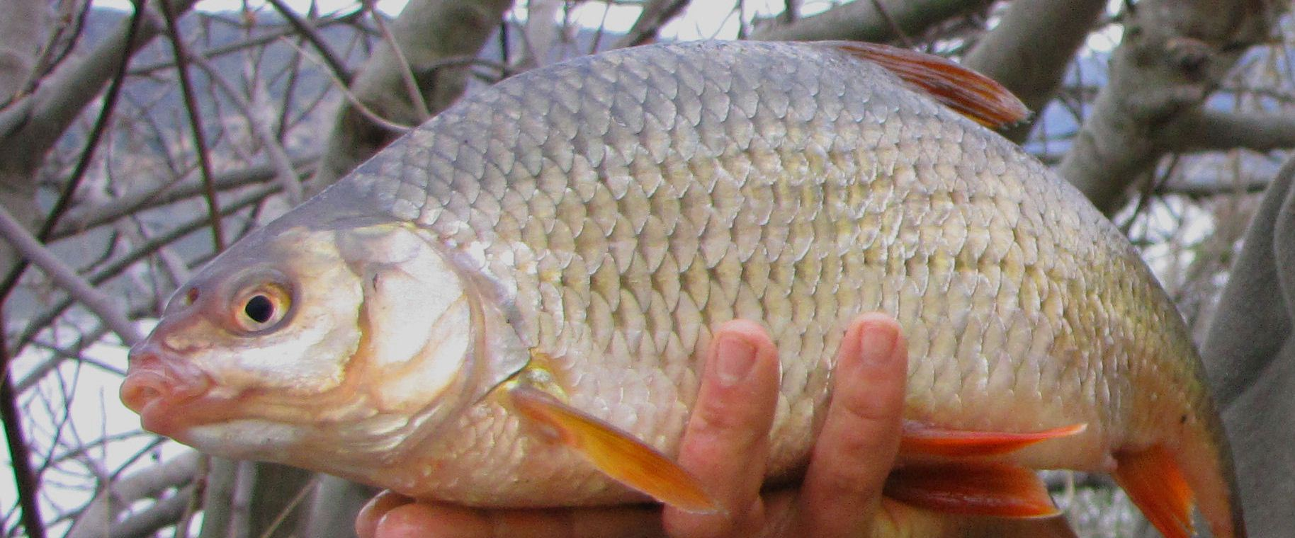 jak łowić ryby jesienią