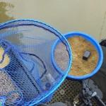 kolor zanęty a brania ryb
