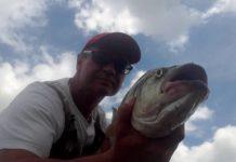 Łowienie boleni w praktyce