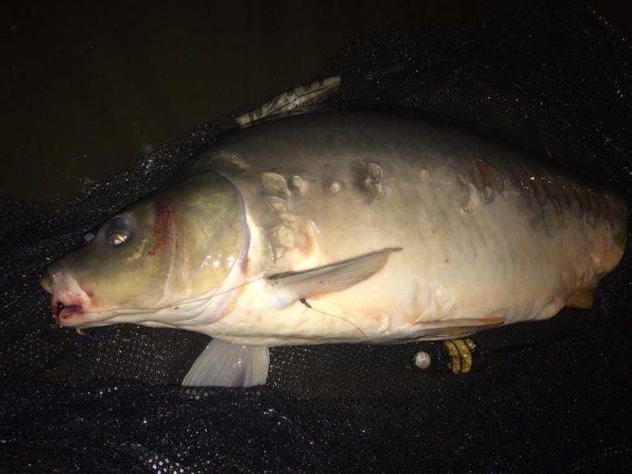 o czym pamietać łowiąc ryby w nocy