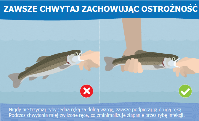 prawidłowy chwyt ryby za pysk