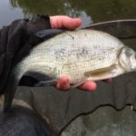 wędkarstwo w jesiennych kanałach